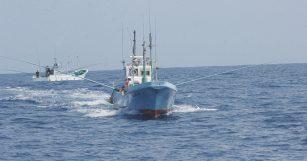 魚魯魚魯 旬の食材 舞阪もちかつを もち鰹漁