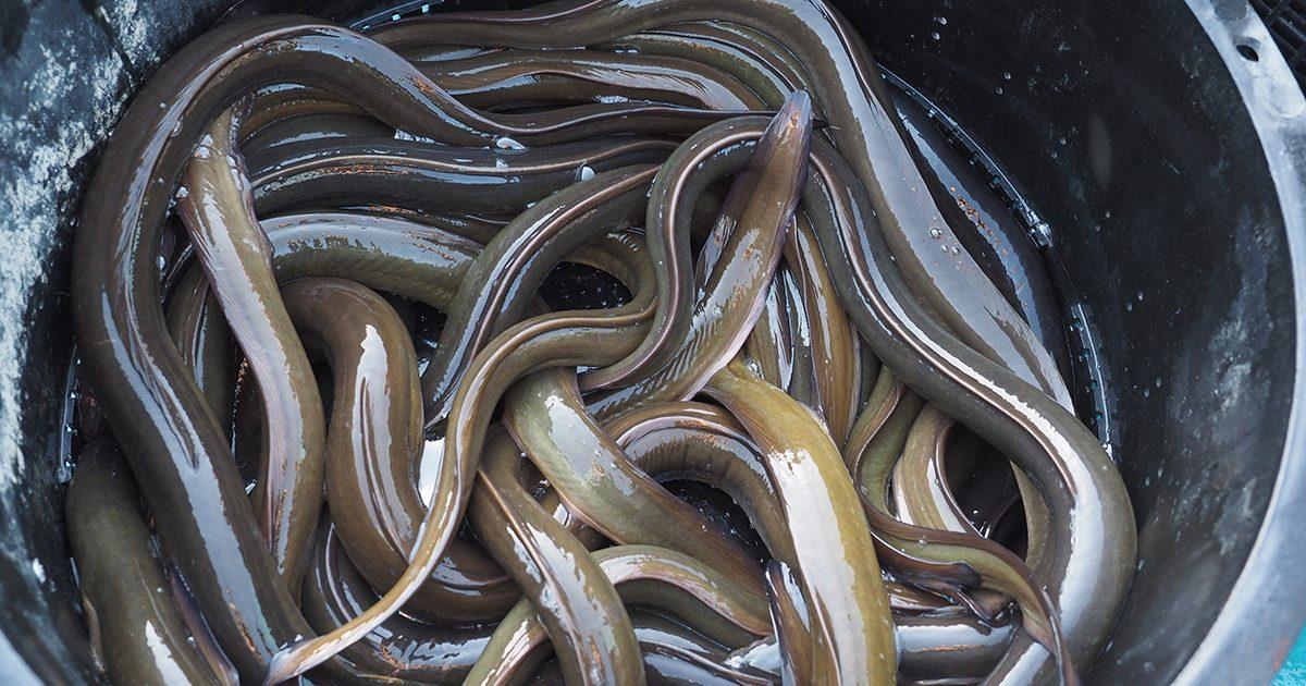 魚魯魚魯 旬の食材 鰻