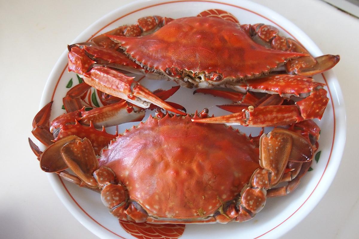 魚魯魚魯 旬の食材 ワタリガニ 茹で蟹
