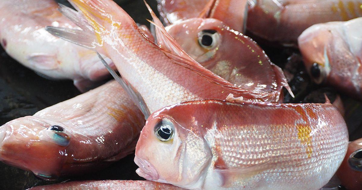 魚魯魚魯 旬の食材 甘鯛