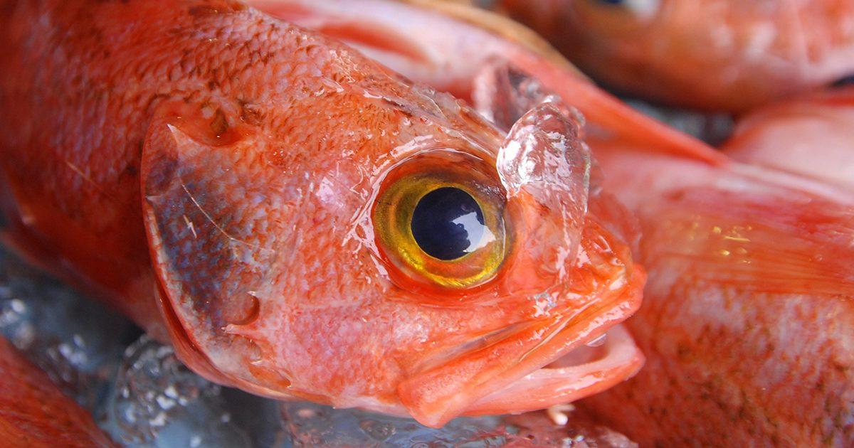 魚魯魚魯 旬の食材 チョウカ