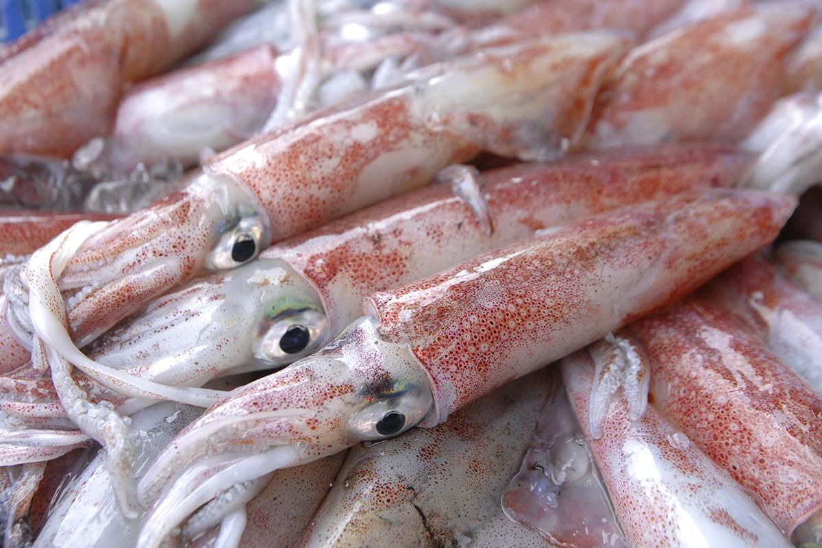 魚魯魚魯 旬の食材 ヒイカ
