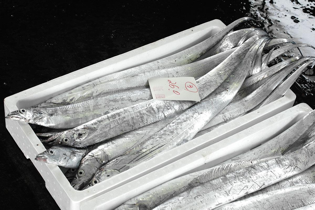 魚魯魚魯 旬の食材 タチウオ