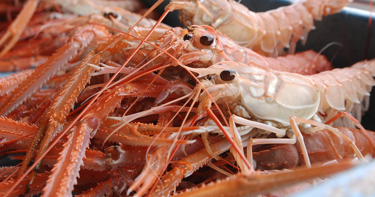 魚魯魚魯 旬の食材 アカザエビ