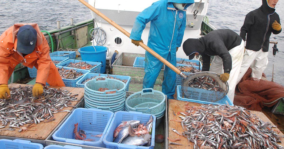 魚魯魚魯 旬の食材 アカザエビ 船上での仕分け