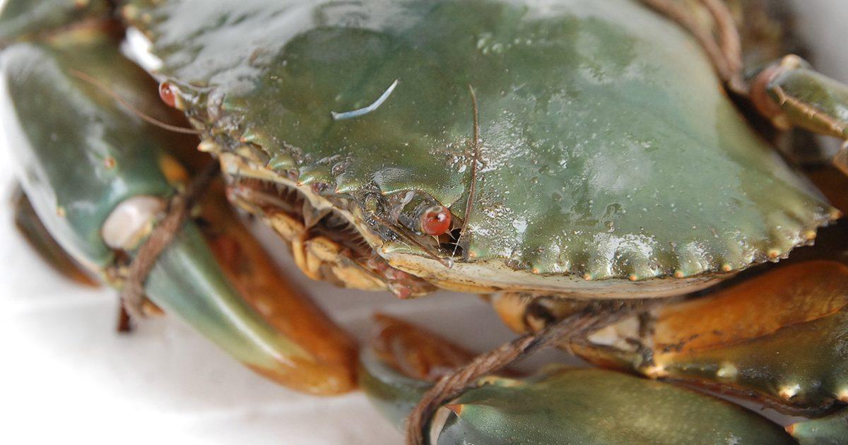 魚魯魚魯 旬の食材 ドウマンガニ