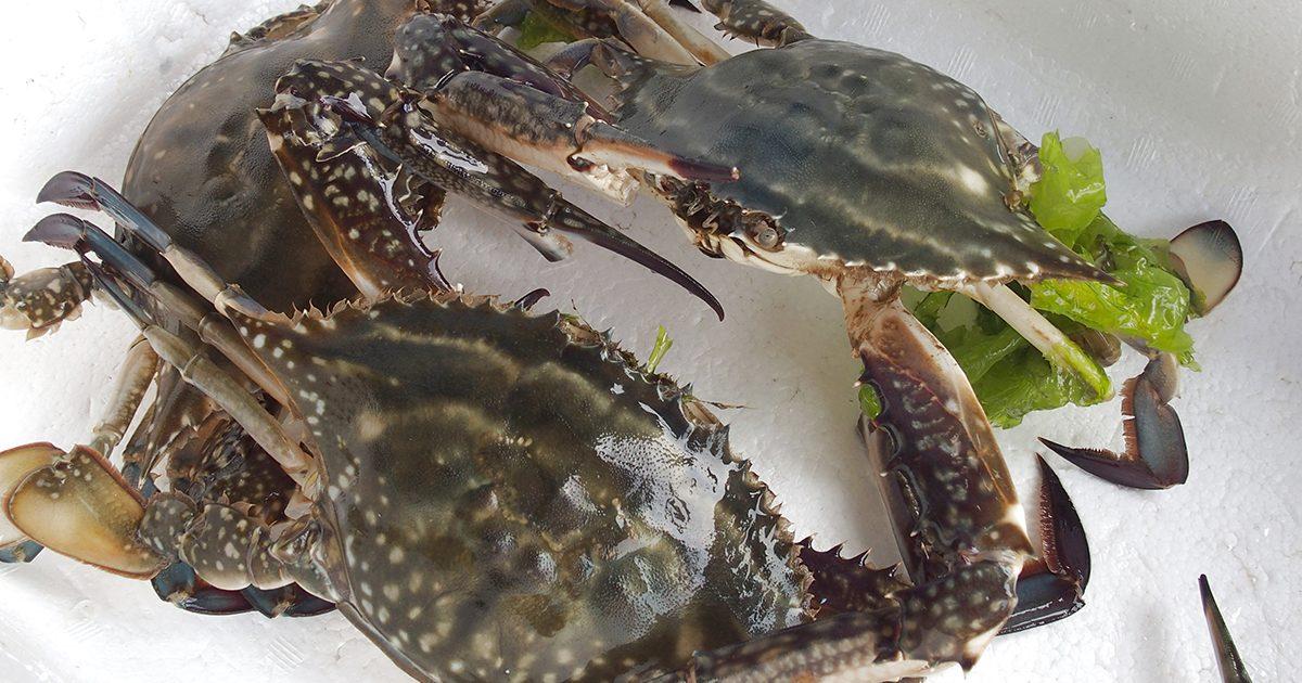魚魯魚魯 旬の食材 ワタリガニ