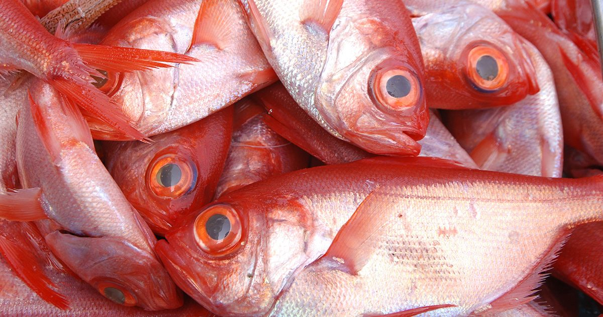 魚魯魚魯 旬の食材 金目鯛