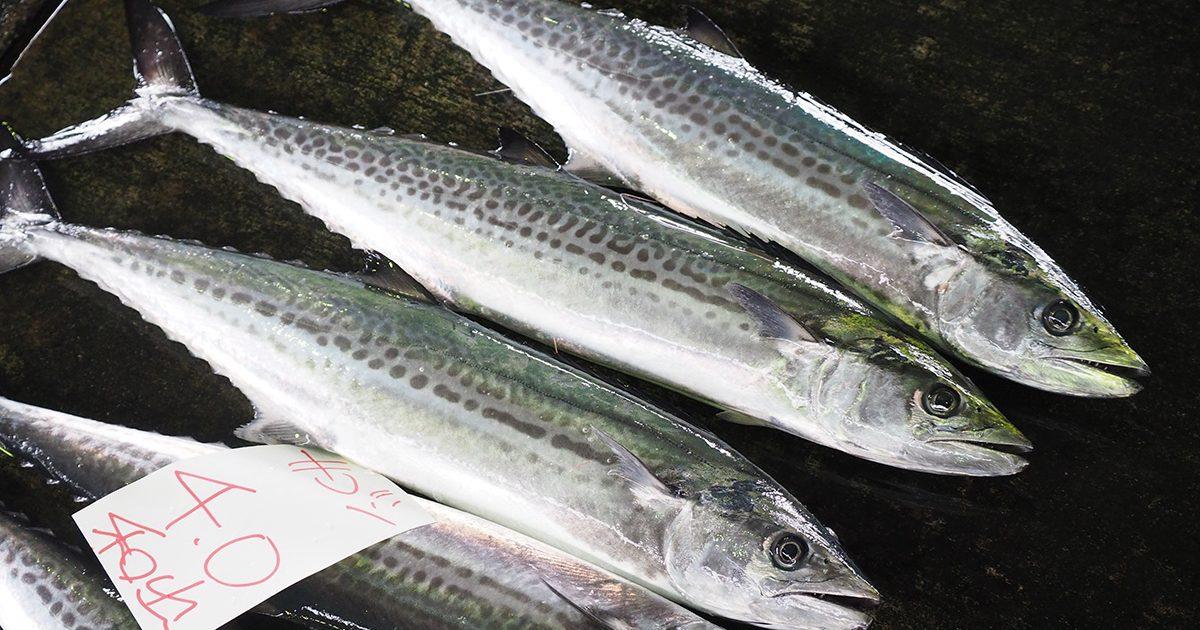 魚魯魚魯 旬の食材 サワラ